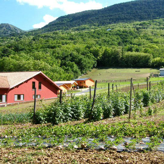 Società Agricola Antica Forconia