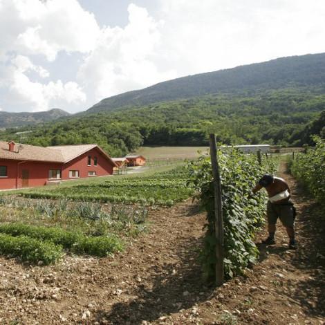 Società Agricola Antica Forconia 1