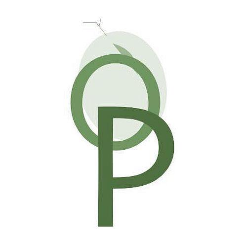 Oleificio Piccinini 0