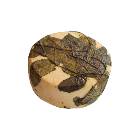 Pecorino cheese in walnut leaves