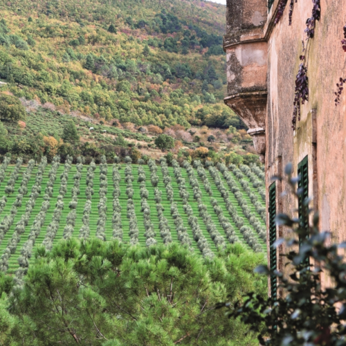 Azienda Agricola Biologica Antonio Bachetoni 2