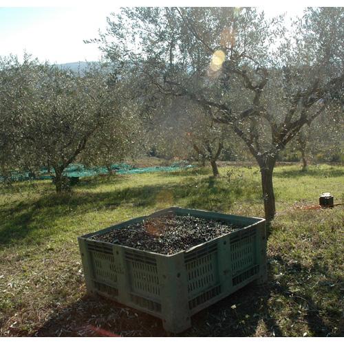 Azienda Agricola Biologica Monaco 1