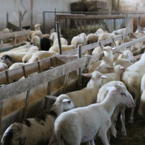 Società Agricola Fabrizi 2