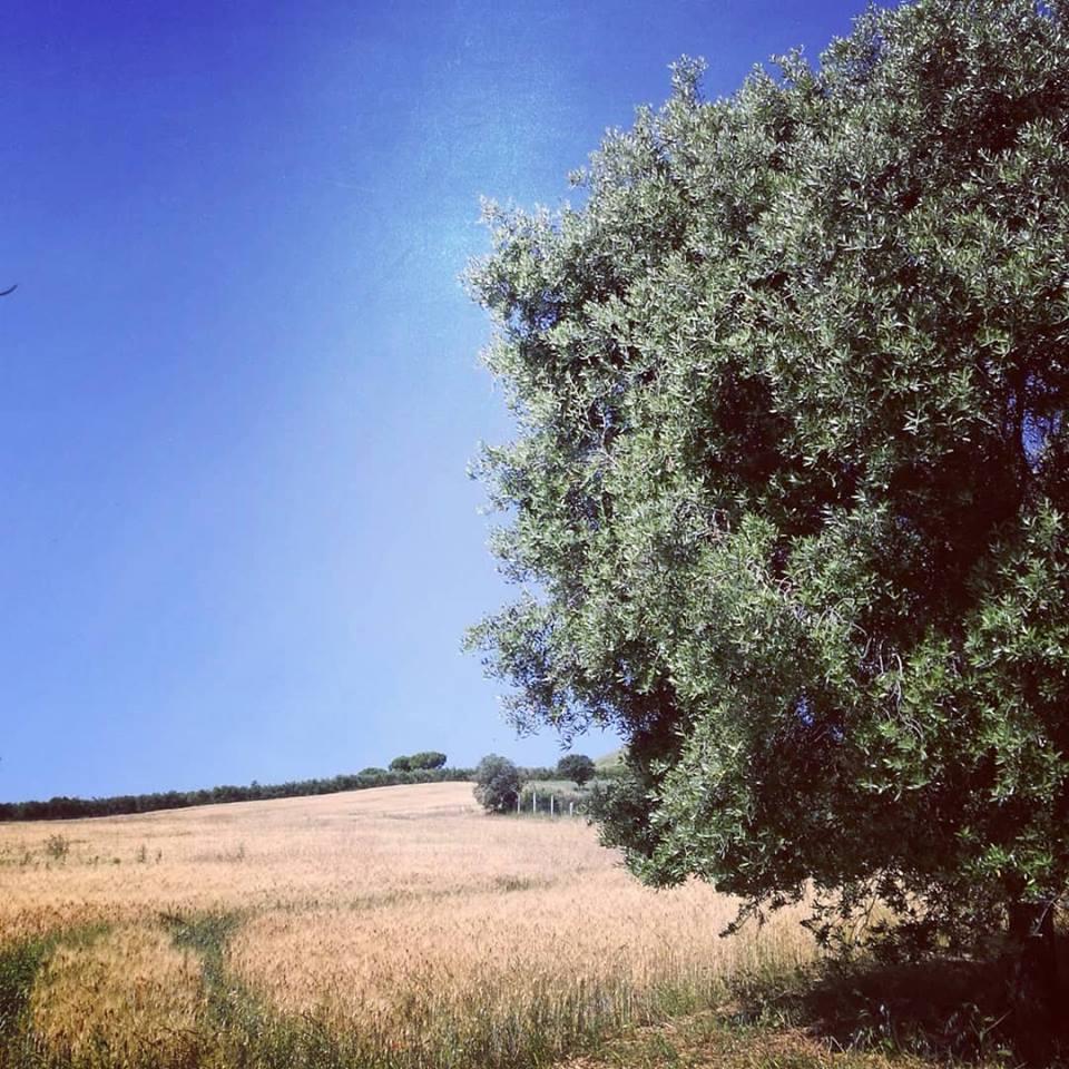Selva Giurata 4