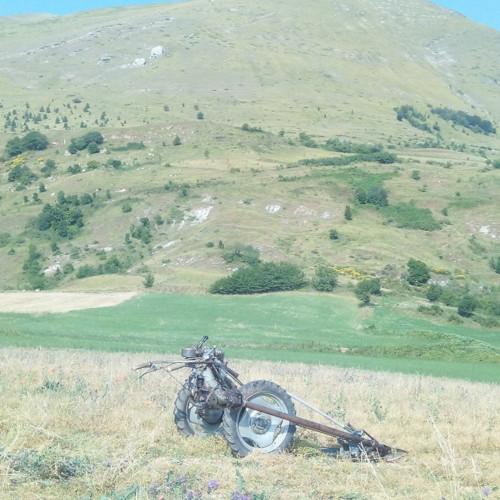 Azienda Agricola Lorenzo 1