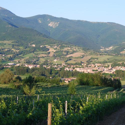 Azienda Agricola Gatti Marco 1